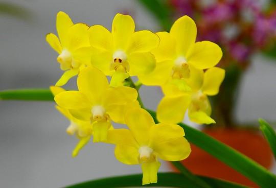 201902041428 黄色 w1024 DSC_3444.jpg