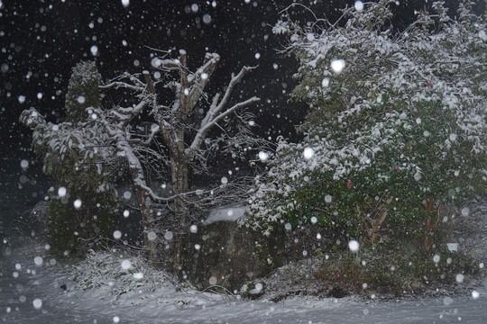 201903301832 雪降り w1024 P1410467.jpg
