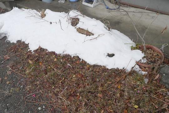 201903311718 屋根落下雪 w1024 P1410516.jpg