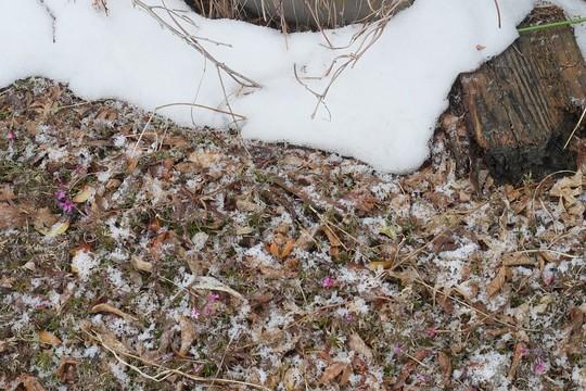 201904021221 屋根落下の雪と W1024 P1410567.jpg