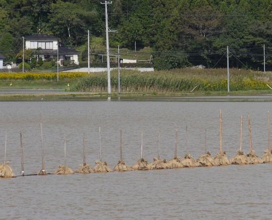 201910131101 米川はせ水没 w1024 P1570671.jpg