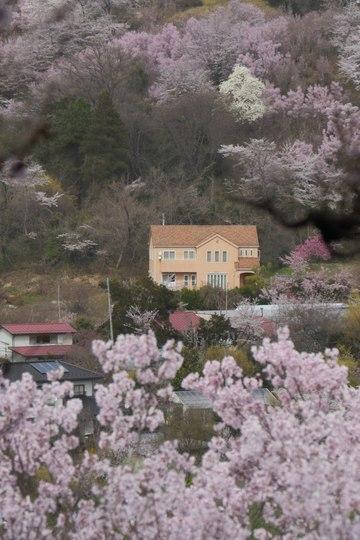202103301331 花見山見る家 h1024 P1740450 ojx87.jpg